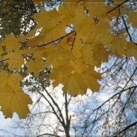 листья клёна :: Мария Исаева