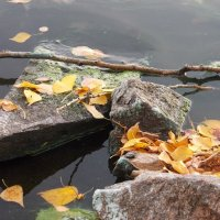 Последние дни уходящей осени.... :: Светлана Игнатьева