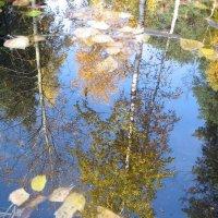 Осенние лужи :: Maxim Bondar