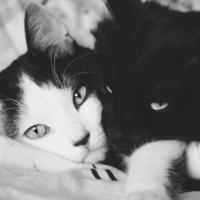 Мишута и Степа :: Александра Костюкевич