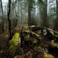 Лесной ноябрь :: Екатерина Тумовская