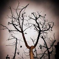 Дерево в Фигейросе :: Полина Калинкина