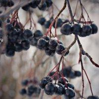 berries :: Arina Kekshoeva