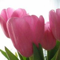 Тюльпаны :: Анна Ломако