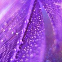Фиолетовое настроение :: Алёна Дягелева