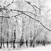 Выпал снег. :: Владислав Куликов