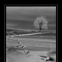 зима :: Виталий Волкоморов
