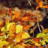 Осенние краски :: Игорь Мукалов