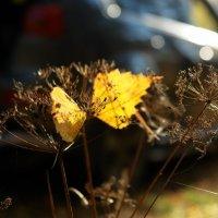 осенние листья :: katya Denisova