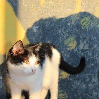 Кошка смотрящая на солнышко ) :: Алинка Яковлева