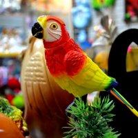 Попугай :: Алинка Яковлева