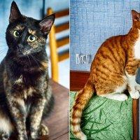 Cats :: Антон Богданов