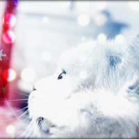 Skumpy is dreaming :: natalia nataria