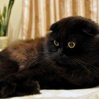 Жил да был черный кот :: Юрий Решетар