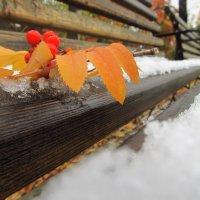 Ветка рябины на снегу. :: Екатерина Кузнецова