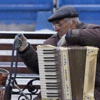 Уличный аккордеонист :: Виталий Волкоморов