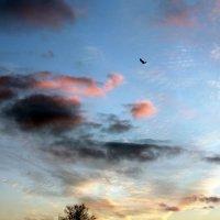 Деревья, птицы, облака... :: Валентин Родоманов