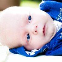 Мишуля, 2 месяца :: Елена Беляева
