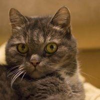 Кот просто кот :: Igor Pavlyuk
