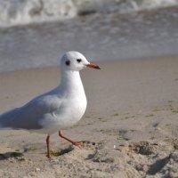 Чайка :: Алина Маримончик