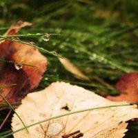 Осень под ногами :: Елена Казакевич