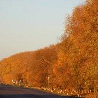 Осень :: Strapman _