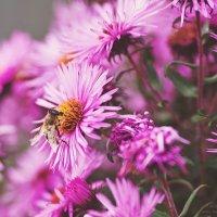 Осенние цветы :: Таня Берестова