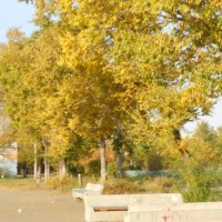 Осенняя солнечная погода. :: Виктория Тихонова