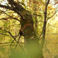 Осень :: Григорий Сальников