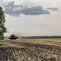 Сборка урожая :: Виктория Левина