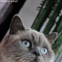 Загадочный кот :: Виктория Левина