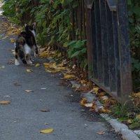 кошка,которая гуляет сама по себе :: Юлия Кобелева