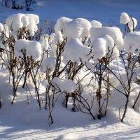 Снежные одуванчики. :: Елизавета Успенская