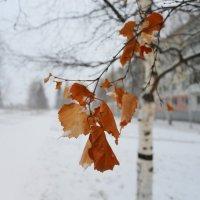 Уходящая осень :: V M