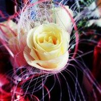 Роза :: Алинка Яковлева