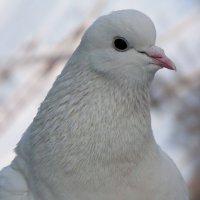 Птица мира :: Ксения Космачёва