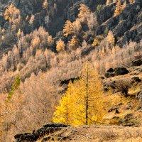 осень в горах...© :: Maxxx©