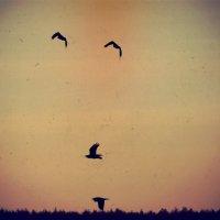 Obloha a vtáky :: Натали V