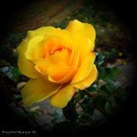 желтые цветы :: Наталья Козловская
