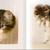 Кошачьи натюрморты :: Artur Alekperov