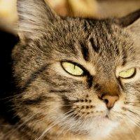 Кошка. просто кошка :: Владимир Сорин