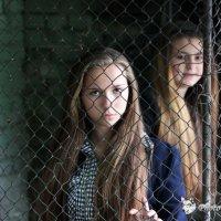 Детки в клетке :: Sergey Klyuzko