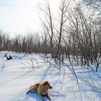 На острове зимой... :: Вероника Полканова