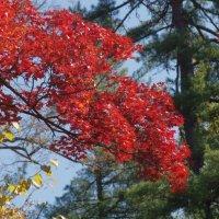 Цветная осень :: Андрей Лаштур