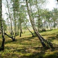 Пляшущий лес :: Сергей Брещук