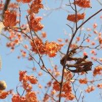 Осенние кружева :: ирм. Феодосий Олег Раздобреев