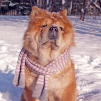 Морозный полдень :: Марина Поздеева