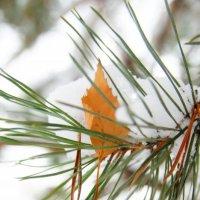 В нежно-снежных объятьях :: Екатерина Сергиенко