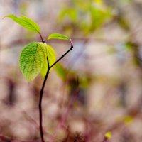 еще зеленый :: Анастасия Nast