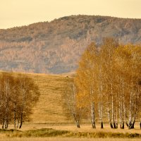 В багрец и в золото одетые леса...© :: Maxxx©